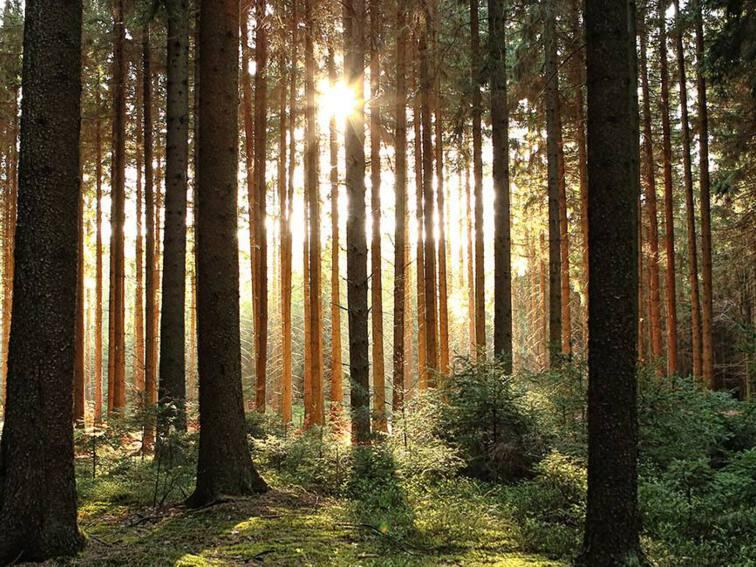 Slider bomen 1920x650.jpg